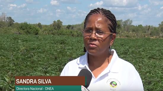 Directora nacional de extensão agrária monitora decurso da presente campanha em Mabalane
