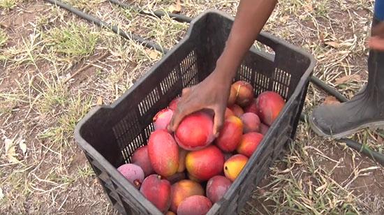 Linhas de crédito FDA ajudam os pequenos agricultores a desenvolver