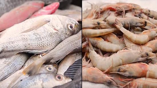 Gaza aposta em piscicultura como caminho na diversificação produtiva