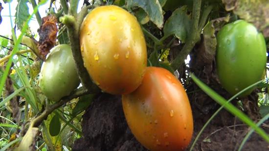 Jovens Moçambicanos investem na agricultura como um projecto de vida