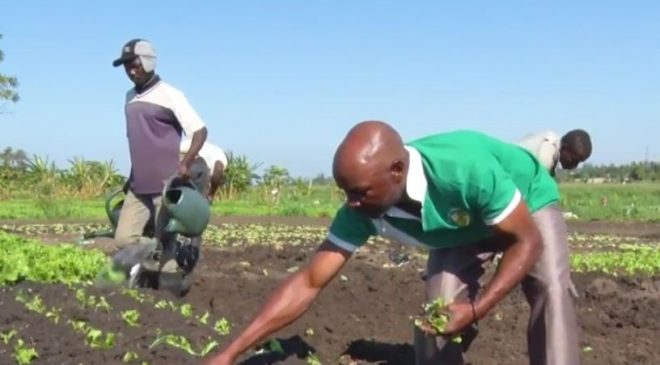 Associativismo agrícola ajuda os pequenos produtores a acederem o mercado e prosperarem