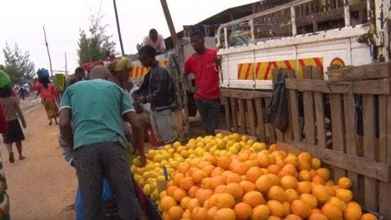 I Fórum provincial de fruteiras realizado na província de Inhambane