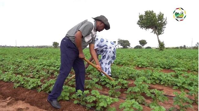 CN Farma é uma propriedade agropecuária instalada na província de Inhambane