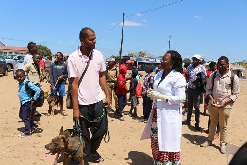 Directora da Agricultura e Segurança Alimentar da Cidade de Maputo interagindo com um proprietário de um animal de extimação após a vacinação contra Raiva, Bairro de Zimpeto